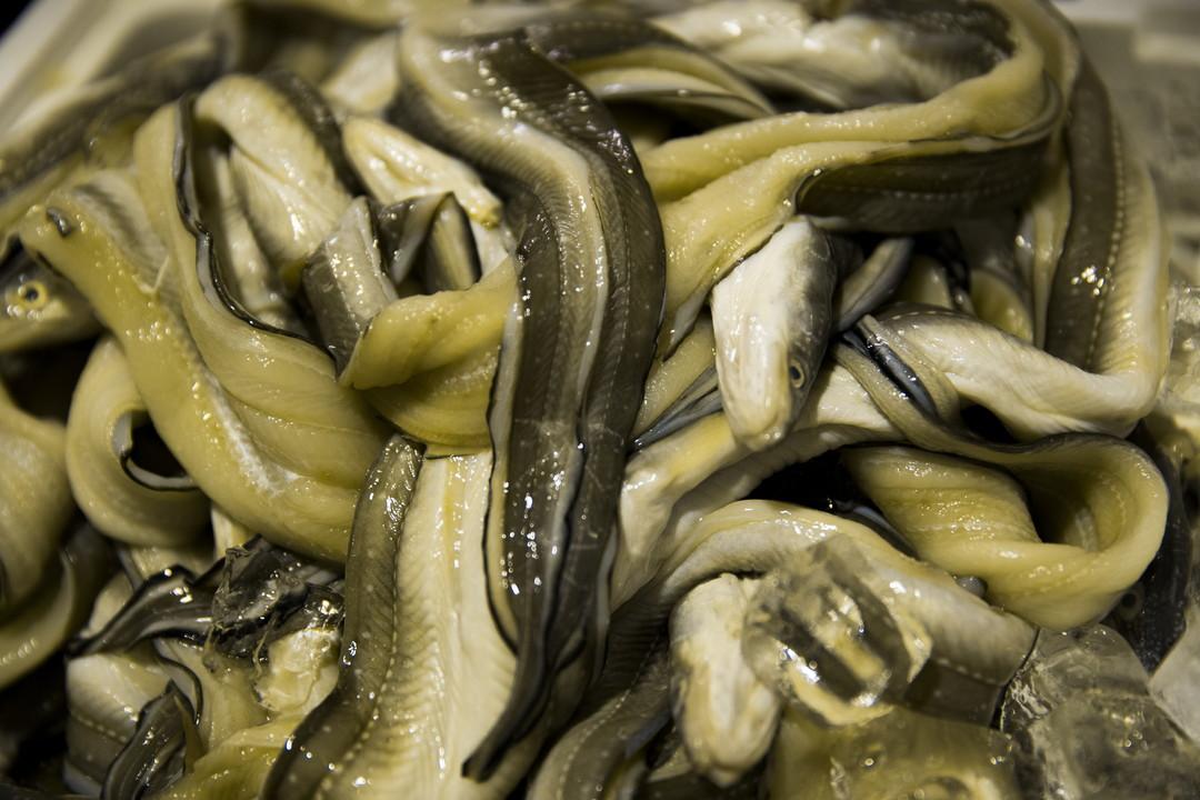 美味しい鮮魚の見分け方