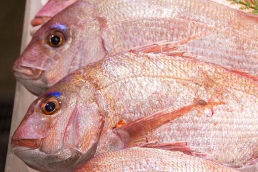 【新鮮な魚】のカンタンな見分け方