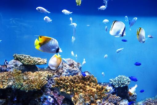 おすすめ水族館ランキング