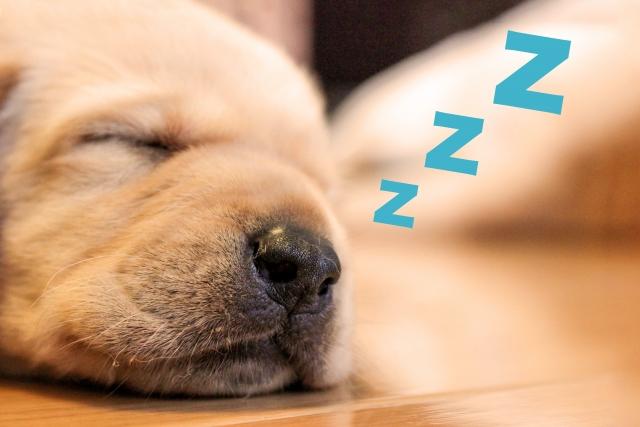 夜中に目が覚めたら、なかなか寝付けなくなりますよね