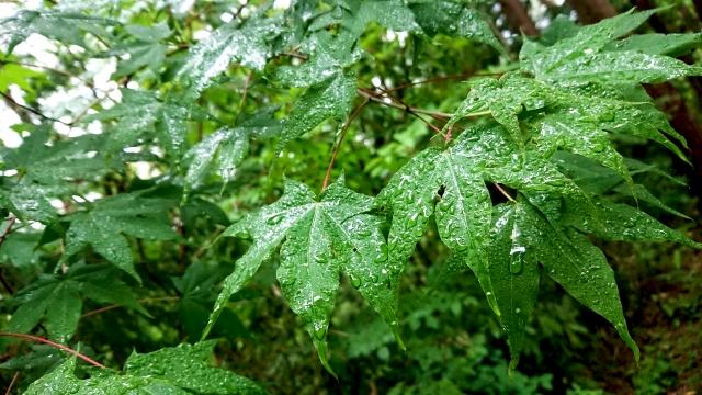 雨がしっとりと降り続いている 本日の広島市