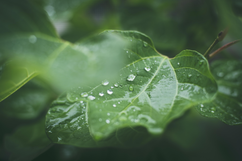 雨降りの日